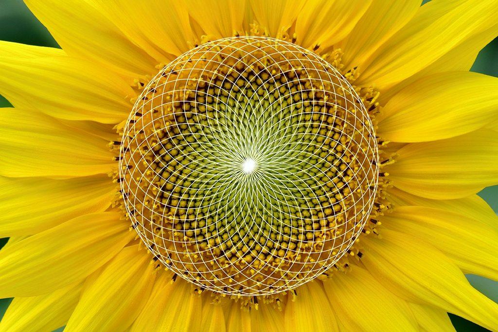 God Code Flower